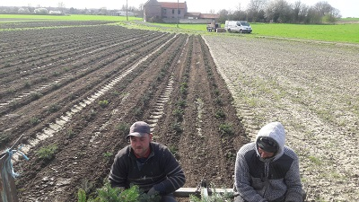 Plantation  de sapins pour noel 2028!